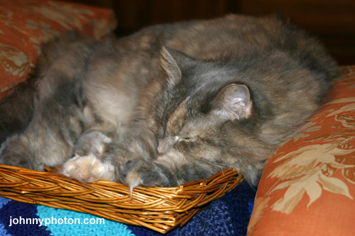 Sleepy time in a basket