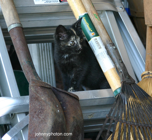 A black kitten on a ladder